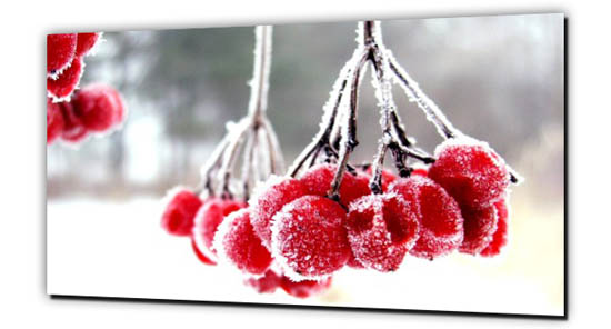 Beeren im Winter